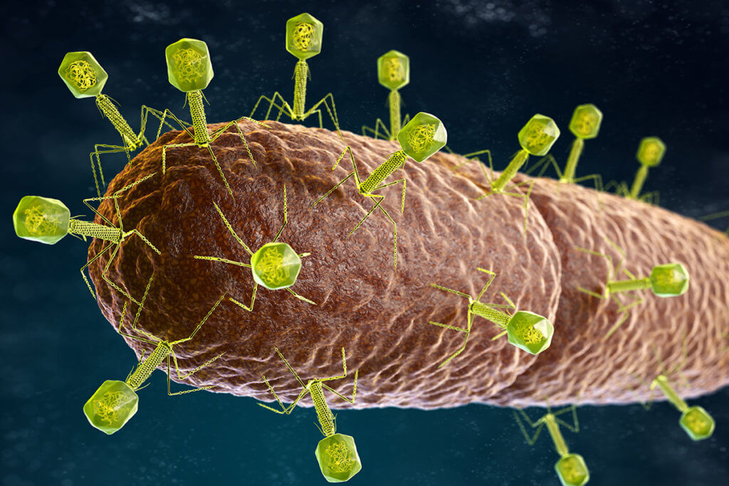 Phagen stellen das bakterielle Gleichgewicht deiner Haut wieder her!