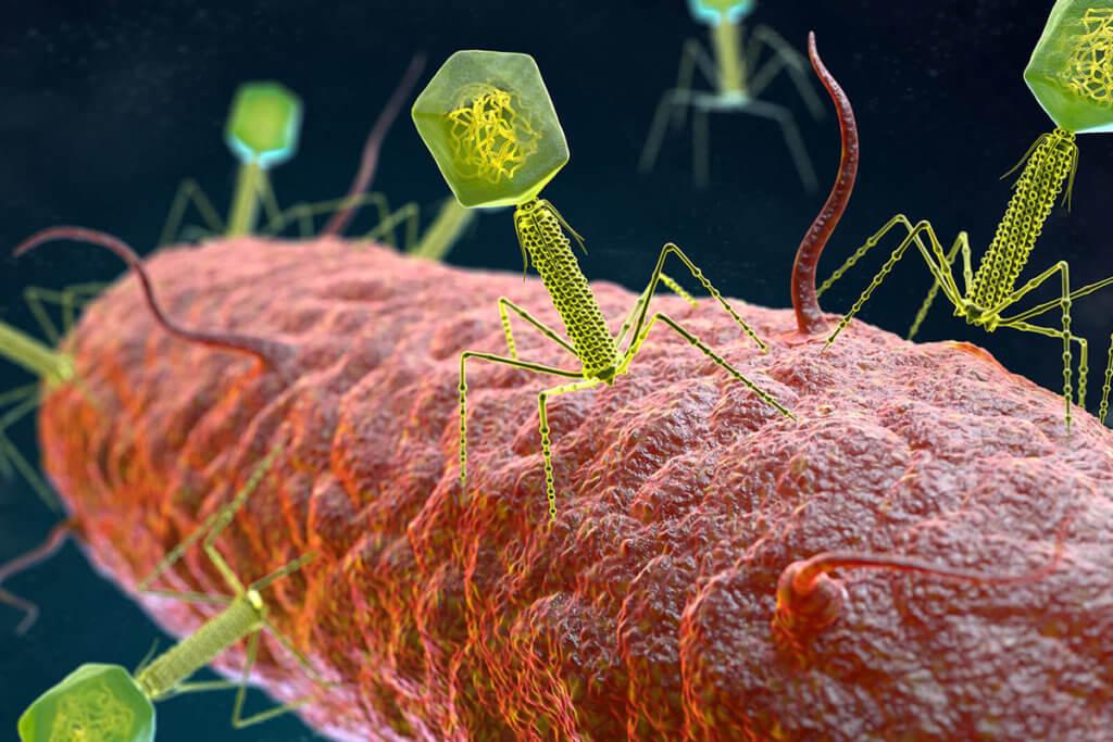 Wie helfen Phagen gegen Neurodermitis?