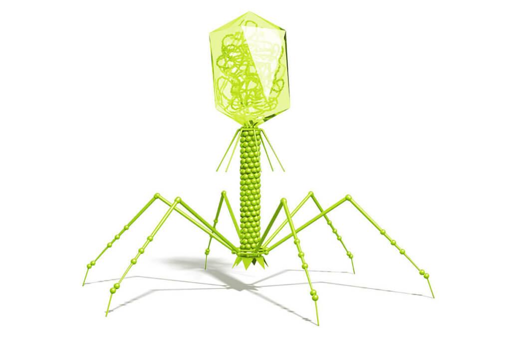 Welche Bakteriophagen werden bei Neurodermitis eingesetzt?