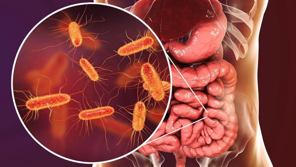 Die meisten Bakterien leben in unserem Darm.