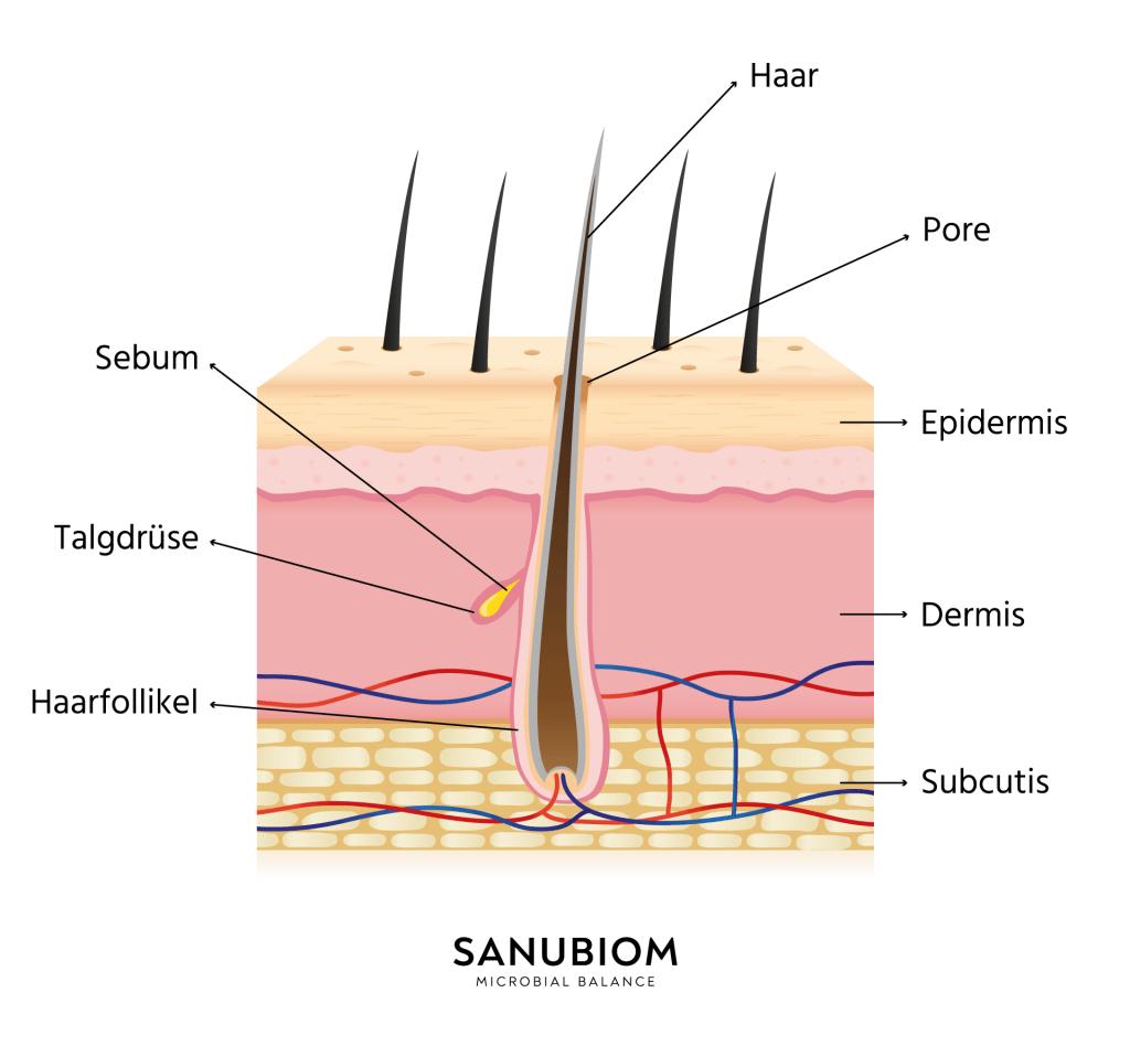 Hautanhangsgebilde der Haut