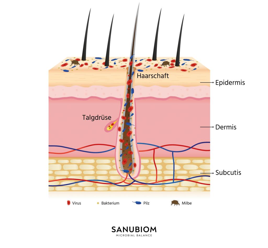 Das Mikrobiom der Hautflora - Welche Aufgaben hat das Mikrobiom?